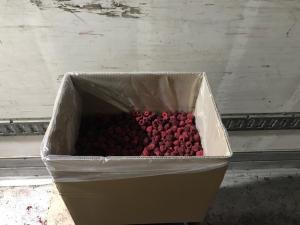 Продам морожену малину запаковану в картонні ящики з кульком по 10 кг