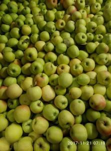 Предлагаю яблоко голден