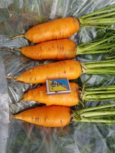 морква сатурно під замовлення.