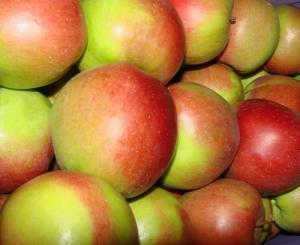 Саджанці яблуні Лігол