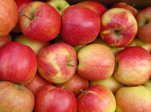 Саджанці яблуні Чемпіон
