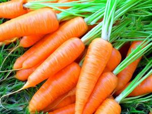 Морква молода
