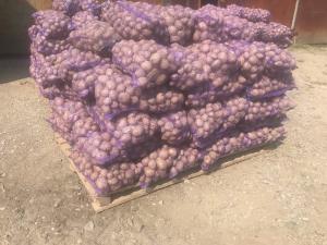 Картопля фермерська