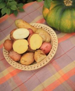 Картошка, Картофель