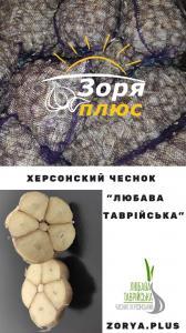 """Херсонский чеснок """"Любава Таврійська"""""""