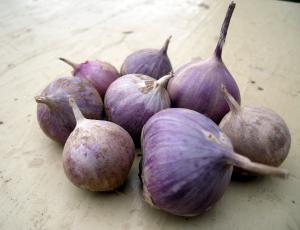 Продам чеснок на посадку Семена чеснока
