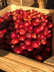 Яблука сортові