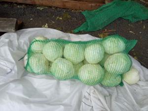 Продам бело качанную капусту