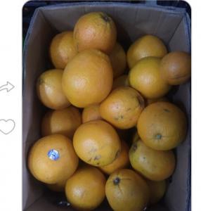 Продамо апельсин на фреши 15 грн