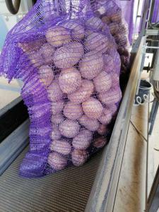 Продаю картоплю оптом Опал