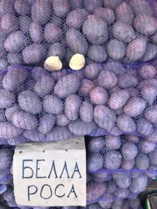 Картопля Белла Роса