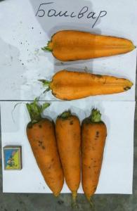 Морковь 1-й и 2-й сорта.