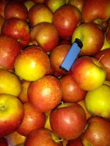 Продам яблука(сорти: флоріна, айдаред, семеренко, джонаголд, джонаред