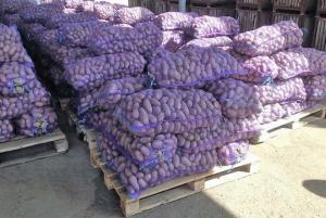 Продам товарный Картофель 5+, сорт Гранада, Белая роса. Киев.