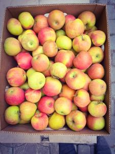 Продам яблука 1 сорту з власного саду до 80т.