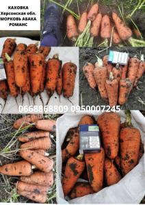 Морковь - Абака и Романс