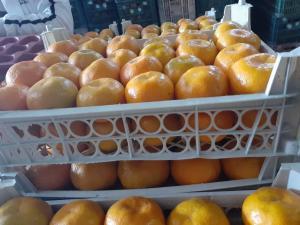 Продам мандарин крупным оптом.