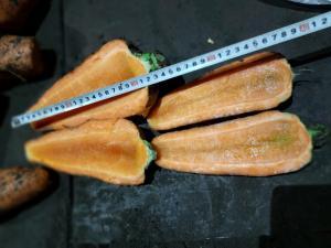 Крупная морковь на переработку