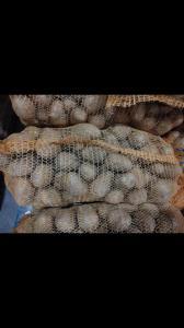 Продаем картофель Гала