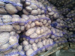Продам Картоплю елітних Голандських і Німецьких сортів