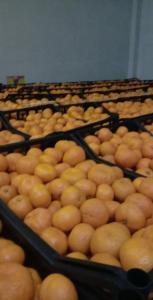 Продам мандарины опт