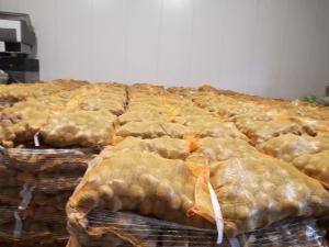 Продам голландську  картоплю мережевої якості.