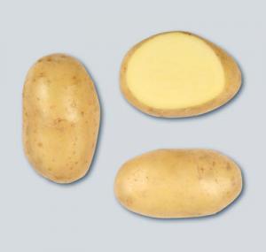 Продаю товарну картоплю, сорт Челенджер