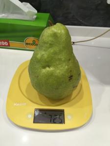 Продам грушу ноябрську з холодильника гарної якості з власного саду