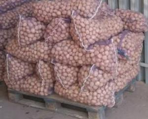 Продам семенной картофель Беллароса Гренада