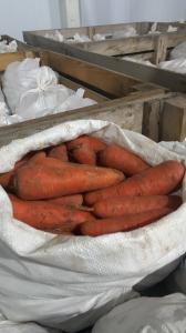 Продам морковку сорт Абако, холодильное хранение,
