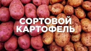 Продаю понад 50+ сортів посадкової картоплі. Також є їстівна.