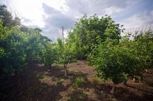 Продам сладкий Миндаль, урожай 2021г.