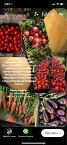Продам овощи в ассортименте помидор, баклажан, перец красный , дыня.