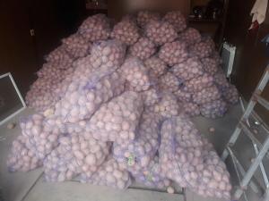 Продам товарный картофель Бела роса