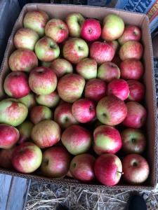 Продам яблуко врожаю 2021 року з саду