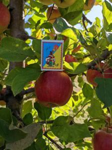 Яблока от производителя: Чемпион, Фуджи, Джона Голд