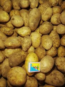 Картопля свіжамережевої якості