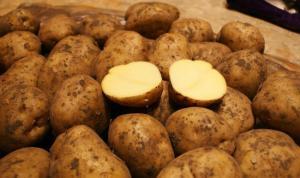 Продається посадкова Картошка, сорт Рівьєра і також посадкова лабела