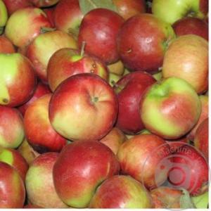 Яблоки украинские